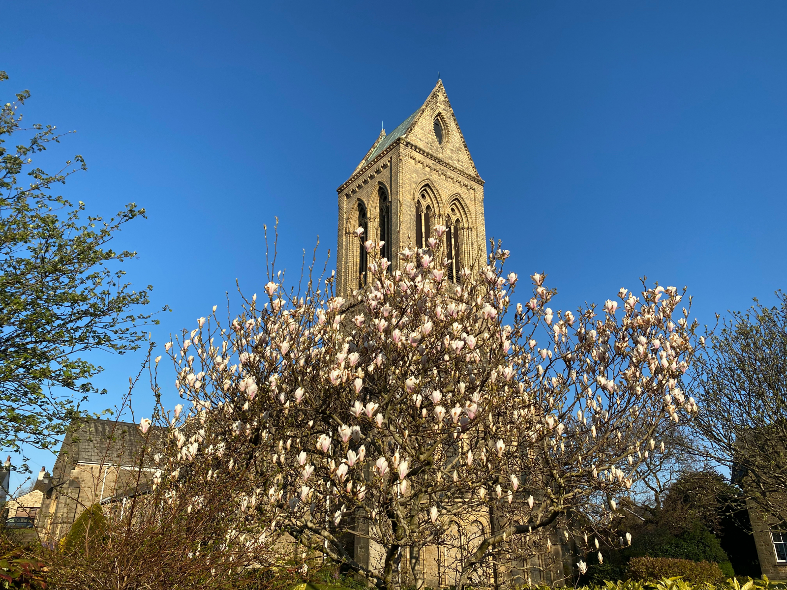 Magnolia Tree at Front
